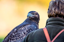 National Centre for Birds of Prey, Helmsley, United Kingdom