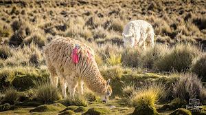 Colca Peru Tours 1