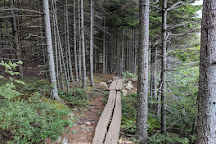 The Bowl Trail, Acadia National Park, United States