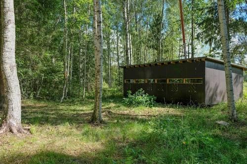 Brown Bear watching in Estonia