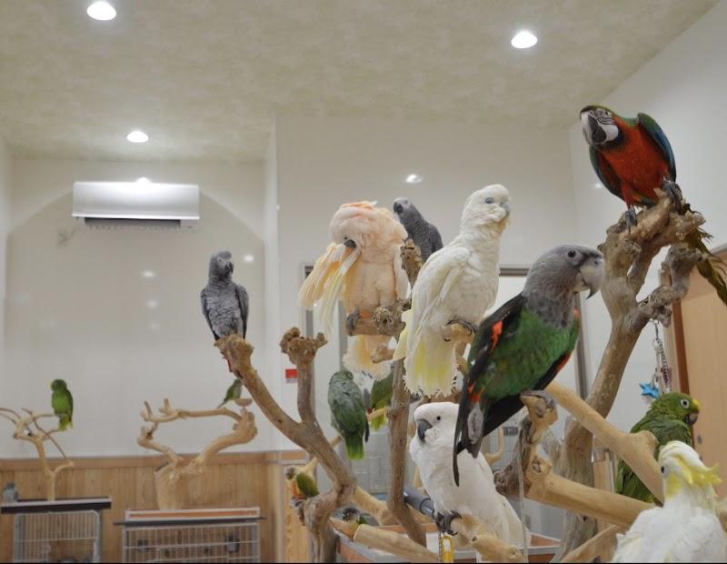 鳥の遊び場 鳥楽園