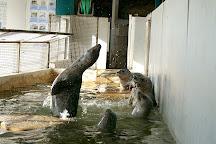 Seaside Aquarium, Seaside, United States