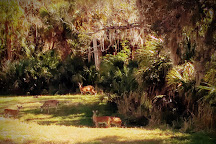 Rothenbach Park, Sarasota, United States