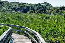 The Sunken Forest, Fire Island, United States