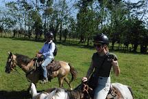 Alberto's Horses, La Fortuna de San Carlos, Costa Rica