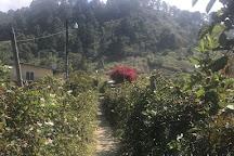 Finca la cantadora, Tegucigalpa, Honduras