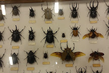 The Schiele Museum of Natural History, Gastonia, United States