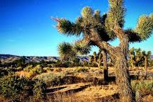 Prime Desert Woodland Preserve, Lancaster, United States