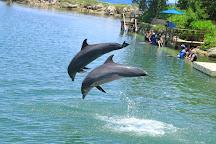Dolphin Cove Montego Bay, Lucea, Jamaica