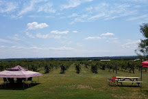 Red Wing Dove Vineyard and Winery, Hamilton, United States