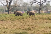 Elephant Breeding Centre, Sauraha, Nepal