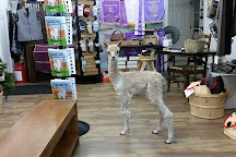 Funny Farm Alpacas, Lecanto, United States