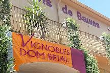 Vineyards DOM BRIAL, Baixas, France