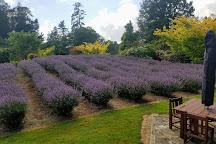 Lauren's Lavender Farm, Taumarunui, New Zealand