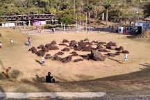 Parque das Mangabeiras, Belo Horizonte, Brazil