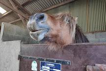 Centre Equestre La Champagne, Saint-Molf, France