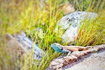 Jonkershoek Nature Reserve, Stellenbosch, South Africa