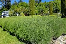 Ben Lomond Lavender, Queenstown, New Zealand