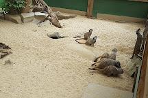 Shepreth Wildlife Park, Shepreth, United Kingdom