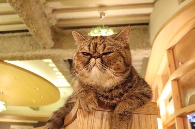 Cat Cafe Mocha Lounge (Shinjuku)