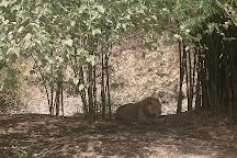 Silvassa Vasona Lion Safari, Silvassa, India