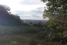 Oversley Wood, Alcester, United Kingdom
