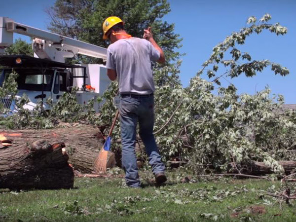 Tree removal services in Fredericksburg, VA by Steadfast Tree Care