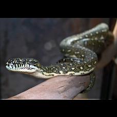 Totally Reptiles melbourne Australia
