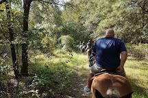 Cactus Jack's Trail Rides, Ocala, United States