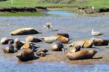 Elkhorn Slough Safari, Moss Landing, United States