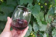 Florida Estates Winery, Land O Lakes, United States
