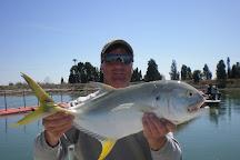 Reel Fish Finder Charters, Charleston, United States