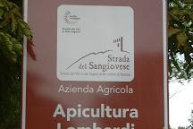 Apicoltura Lombardi, Faenza, Italy