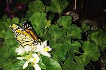 Bear Mountain Butterfly Sanctuary, Jim Thorpe, United States