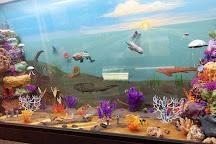 Naranjo Museum-Natural History, Lufkin, United States