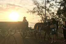 Darwin Horse and Carriage, Darwin, Australia