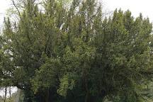 Englischer Garten Eulbach, Michelstadt, Germany