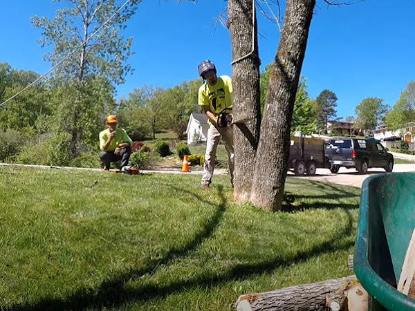 Tree removal being completed by Genesis Tree Service Ashburn VA