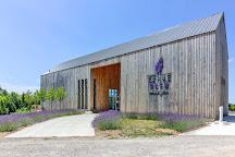 Terre Bleu Lavender Farm, Milton, Canada