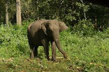 Wayanad Wildlife Sanctuary, Kalpetta, India