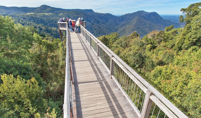 Skywalk lookout, Dorrigo National Park