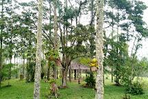 Parque Estadual Carlos Botelho, Sao Miguel Arcanjo, Brazil