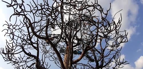 Baltų vienybės medis