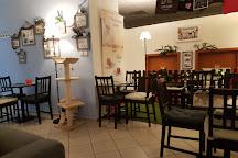 Mackafe (cat cafe), Bratislava, Slovakia