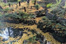 Wombat Hill Botanical Gardens, Daylesford, Australia