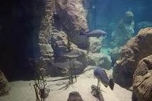 Malta National Aquarium, Qawra, Malta