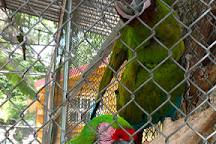 Cocodrilario Kiekari, San Blas, Mexico