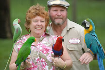 Parrots In Paradise, Glass House Mountains, Australia