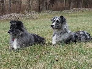Hope's Dog Fencing