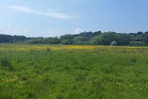 Hambrook Marshes, Canterbury, United Kingdom